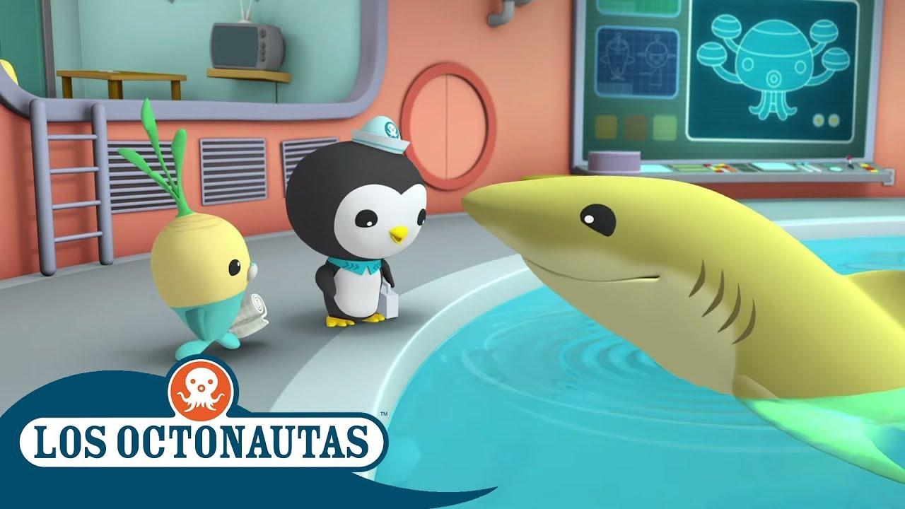 Los Octonautas Oficial en Español - Semana del Tiburón | Protege a los Tiburones | Compilación