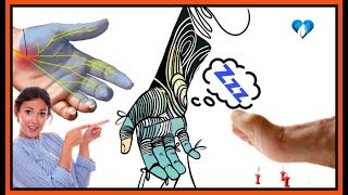 Sanguínea las manos en circulación