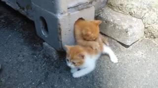 Няшное видео - смешные кошки ))