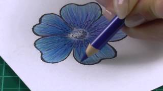 Colouring technique with coloured pencils flowers