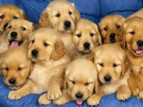 i cuccioli di cane più carini al mondo
