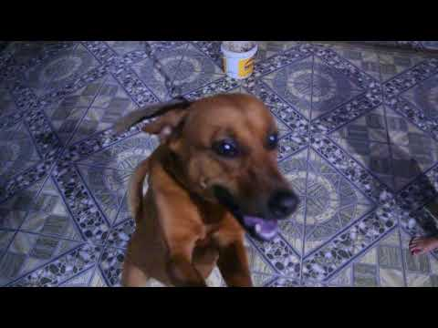 Funny DOG - smart and funny dogs again play spinner