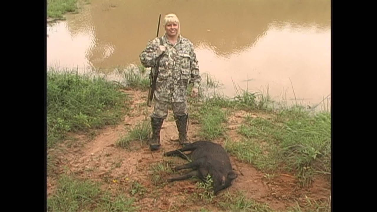 R Hogs Woman charged by boar!...
