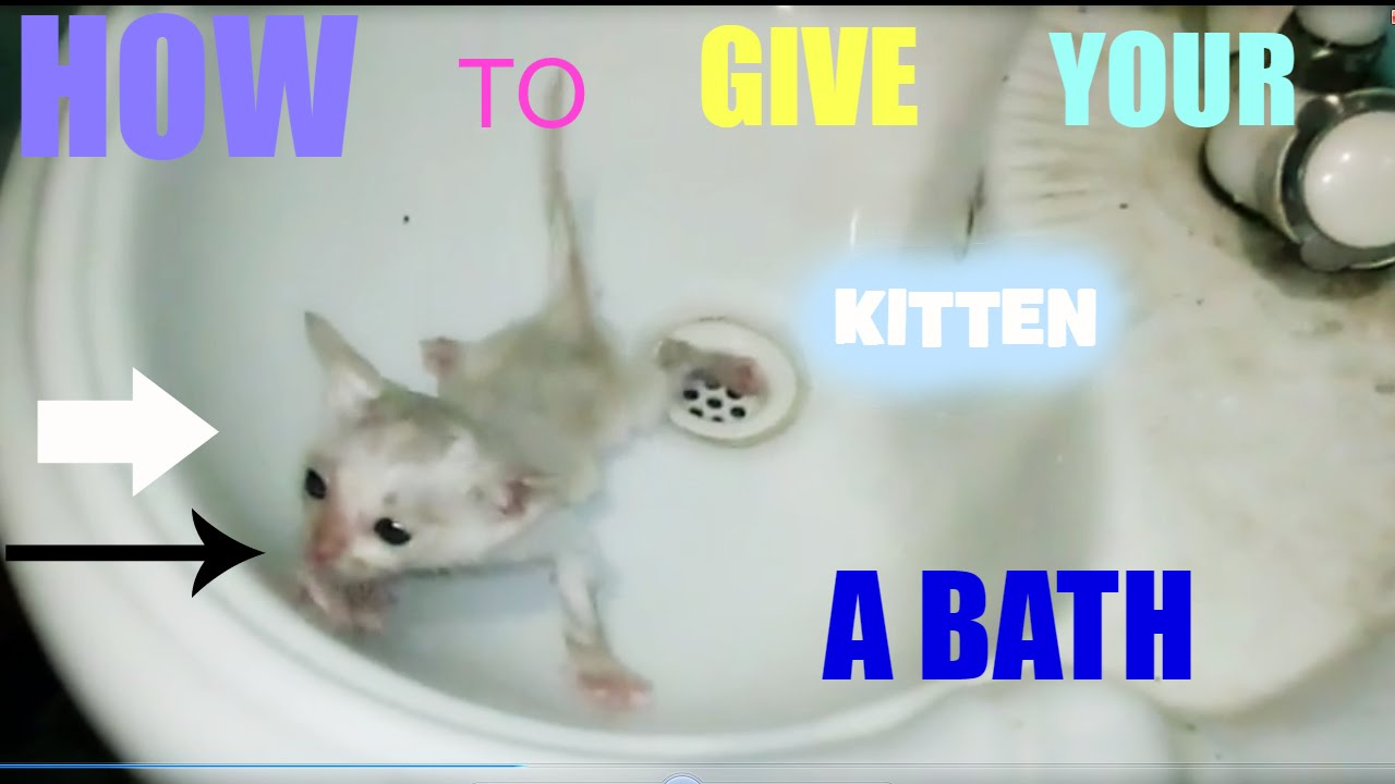 How to Give a Kitten a Bath forecast