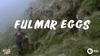 Magnus Nilsson Gathers His First Fulmar Egg