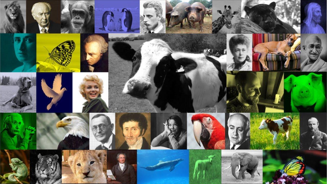 Zitate Zum Gedenken An Das Leid Der Tiere Von Pythagoras Bis Einstein