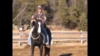 Étalon paint horse