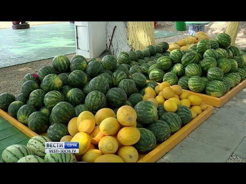 Урожай арбузов в Краснодарском крае оказался меньше запланированного