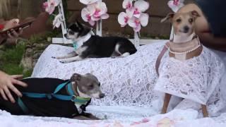 Meine Hunde Wedding   My Dogs  Wedding   Jenna Mourey