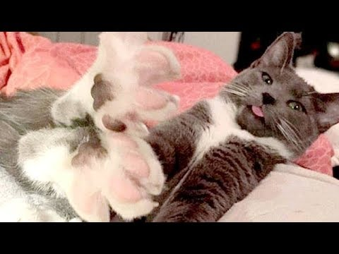 SUPER FUNNY and EXTREMELY CUTE CATS and DOGS - Funny & cute CAT and DOG compilation
