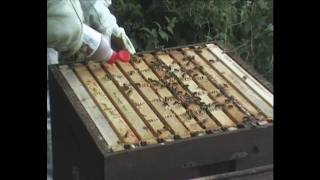 How to use Beevital Hiveclean - A Natural Treatment for Honeybees against Varroa mites