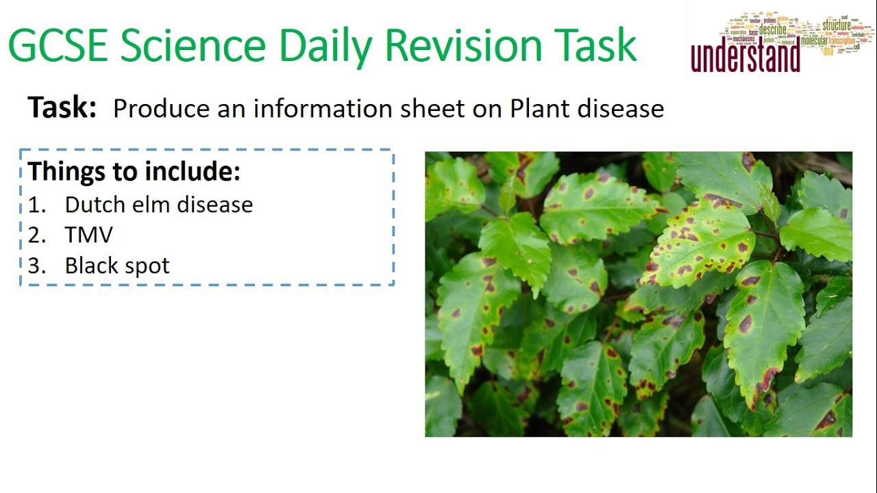 GCSE Science Daily Revision Task 15:  Plant Disease - YouTube