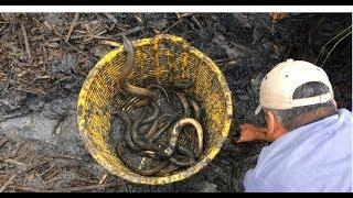 Thu Hoạch Bồn LƯƠN nuôi 8 Tháng - Tòan lươn loại NHẤT