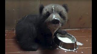 Документальный фильм 360 как работает медвежий детский сад в Тверской области