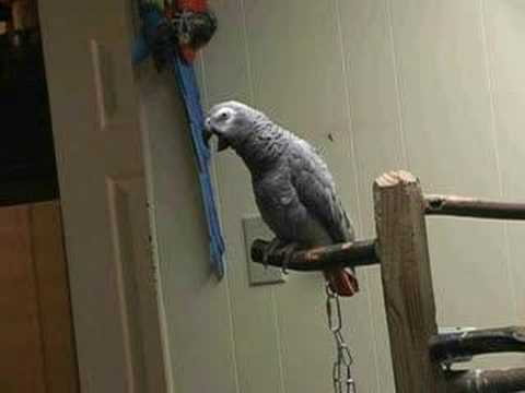 Our L.I. Pet Shop Features one of the Largest Selections of Parrots for Sale!