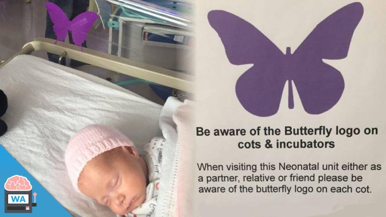 Wenn du diesen lila Schmetterling an einem Kinderbett siehst, frag nicht  die Eltern danach!
