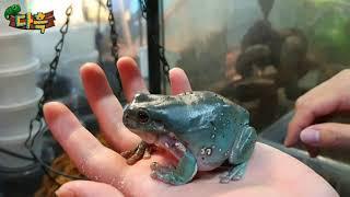 괴물청개구리의 식사시간. 밥을 손으로 받아먹습니다