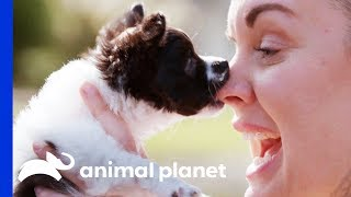 This Blind Puppy Is Stealing Hearts With His Cuteness! | Amanda To The Rescue