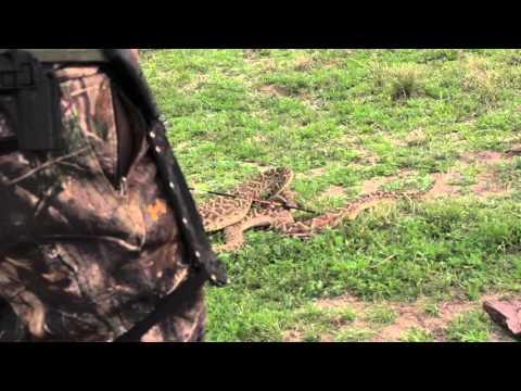 Double Rattlesnake Kill with Diamondback Firearms DB FS 9mm