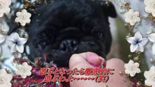 http://hananonikki-2.a-thera.jp/
