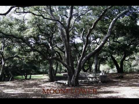 Moonflower by AGAiN - See New Video