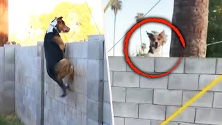 Dog Jumps Insanely High to Say Hello to Friends