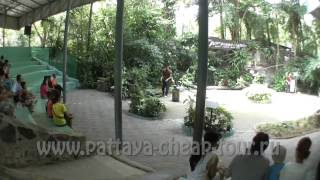 Зоопарк Кхао Кхео в Паттайе!!! Khao Kheow Open Zoo Pattaya!!!. Экскурсии с pattaya-cheap-tour.ru