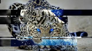 Диалог хищников из семейства кошачьих