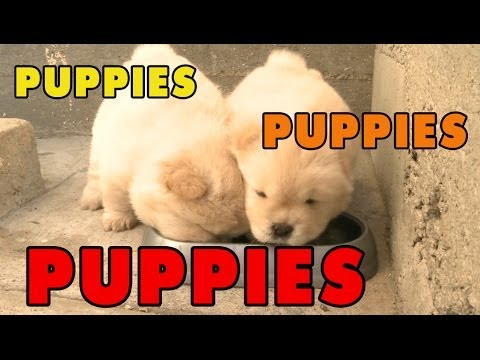 Puppies, Puppies and Puppies! - Episode 5