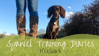 Gundog Training  Heelwork