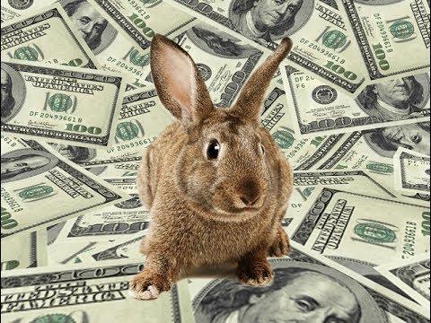 Как реализовать кроликов, СБЫТ ОПТОМ ...