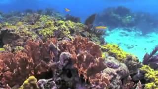 Punta Cana Snorkel & Sail Catamaran - Aventuras Dominican Excursions