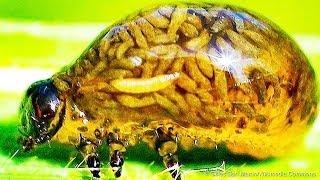 10 Créatures Puissantes Qui Prouvent Que Les Superpouvoirs Existent Vraiment Dans la Vie Réelle