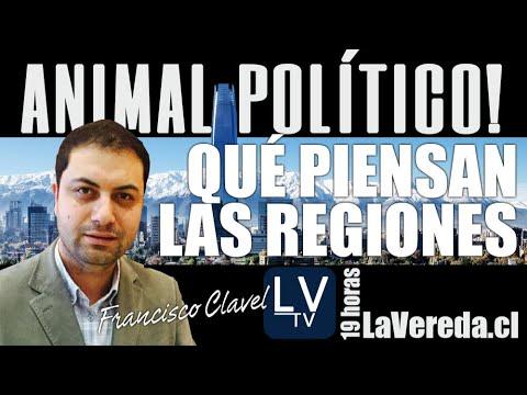 Qué piensan las regiones - en Animal Político
