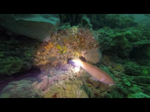 Rip Bank Dive