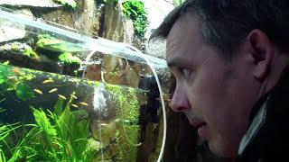 Понижение Ph с 8 до 6.5 - 7 в аквариуме