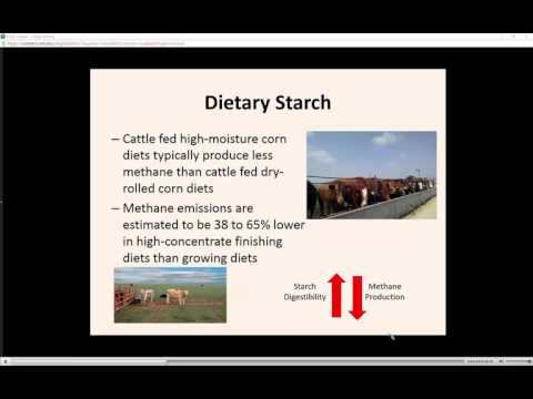 Dietary Impacts on Enteric Methane Production