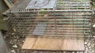 Rabbit / Feral Cat Cage Trap
