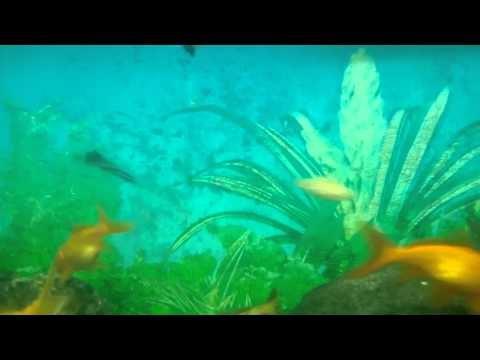 ONGC Dehradun Aquarium Video Oil and Natural Gas Corporation