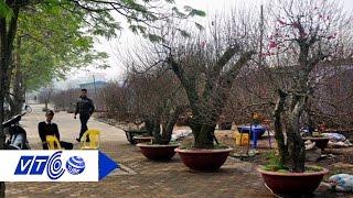 'Choáng ngợp' làng đào cổ thụ trăm tỷ đất Bắc | VTC