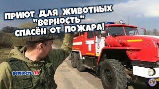 """Приют для животных """"ВЕРНОСТЬ"""" спасён от пожара!"""