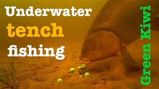 Tench fishing with Green Kiwi - Breamtime S4 E3