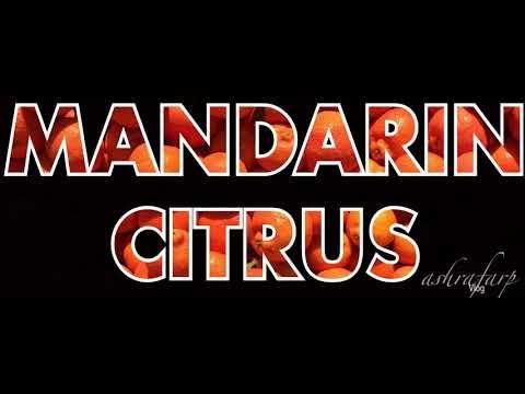 Australia Citrus Season (Mandarin Amigo)