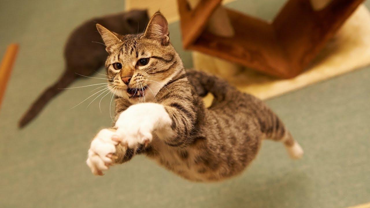 Смешные кошки фото смотреть фуд-фотография