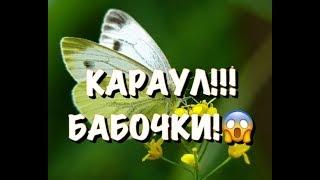 КАТАСТРОФА в СИБИРИ НАПАДЕНИЕ БАБОЧЕК