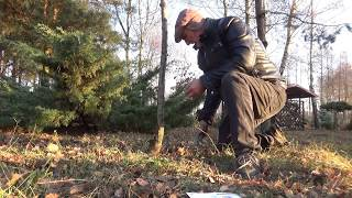 Jak pobudzić drzewa do kwitnienia?