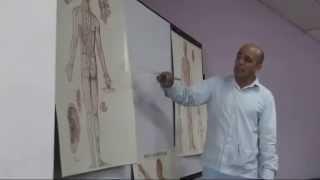 conferencia V   la medicina china y los meridianos   video 1 de 2