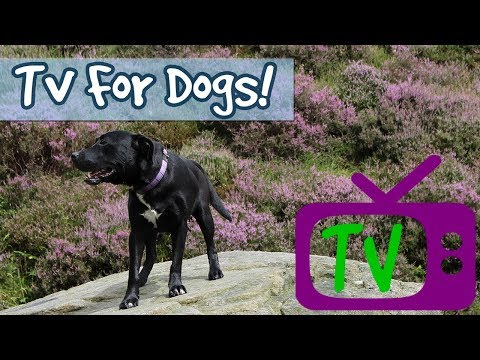 TV for Dogs! Audio with Visuals Therapy for Dogs, Help Entertain My Lonely Dog - Footage for Dogs