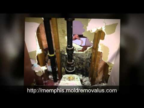 Mold Removal Memphis