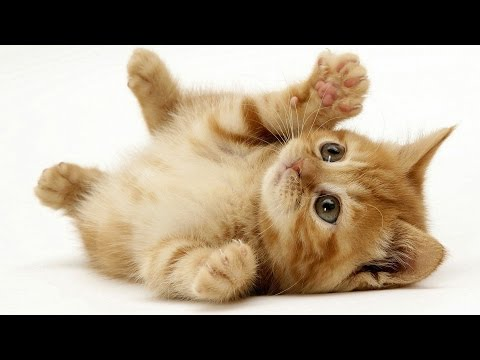 Cute Kittens Compilation 2015
